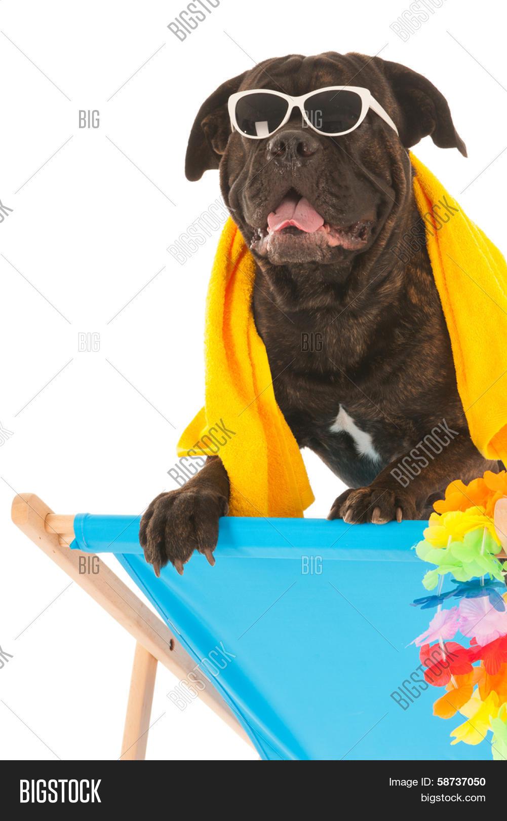 FullBo Beagle Silhouettes Dog Paw Pattern Little Boys Short Swim Trunks Quick Dry Beach Shorts