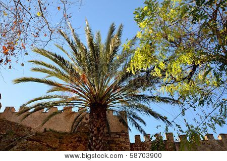 A palm tree in the evening sun