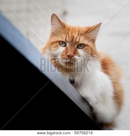 Suspicious Cat On Railing