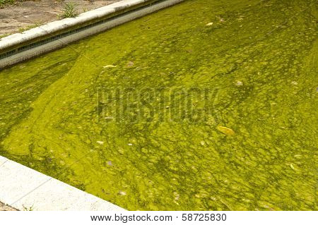 Close Up Algae Infested Green Slimy Swimming Pool