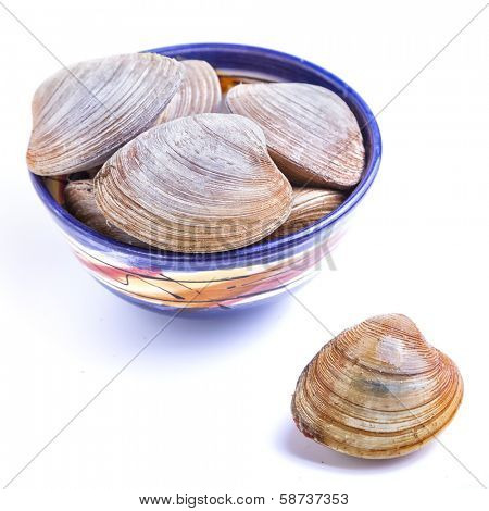 A variety of clams called bar clams on a white background.