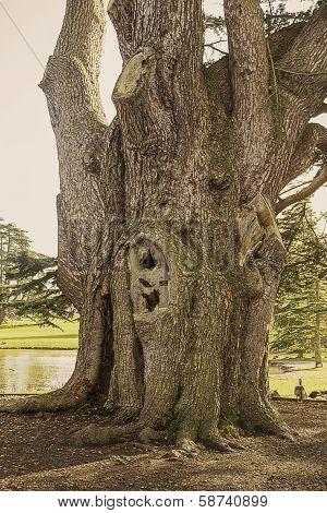 Huge Tree Trunk