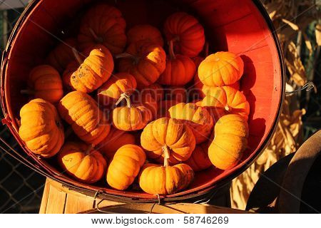 red clay bowl with mini pumpkins