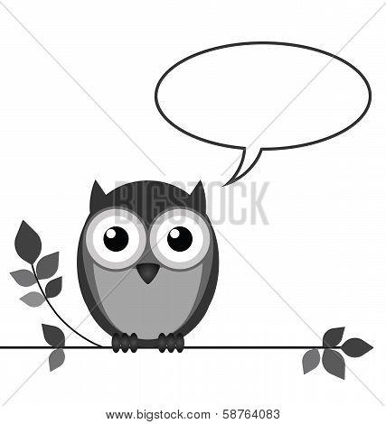 Owl talk