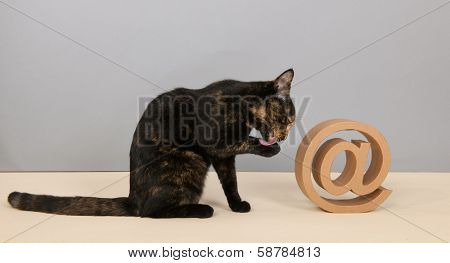 Tortoiseshell cat sitting in studio near at sign