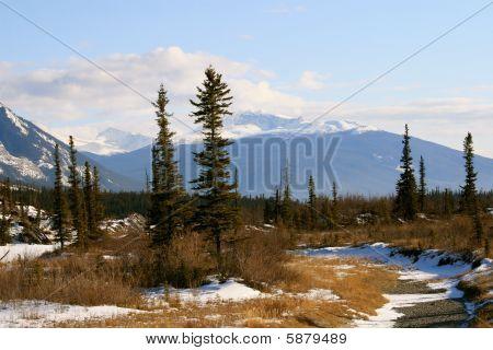 wild scenery in canadian rockies, jasper