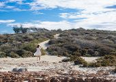 image of girl walking away  - lonely young girls is walking away in the white dress. ** Note: Soft Focus at 100%, best at smaller sizes - JPG