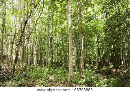 View of forest in Koh Pha Ngan; Thailand