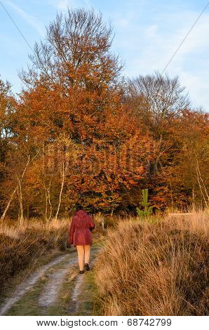 Adult Woman Walking On Path Towards Forest