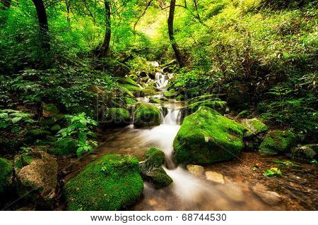 small creek in a mossy forest.