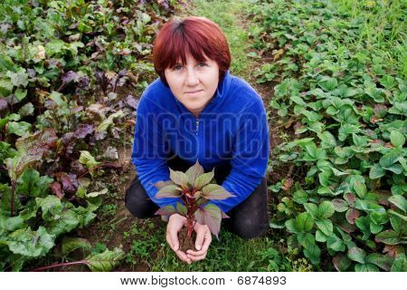 Woman Holding A Seedling In Her Hands