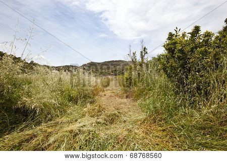 Path mown through long grass, Valencia region, Spain