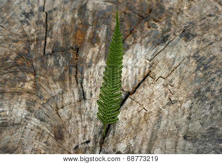 Leaf Born On The Stump