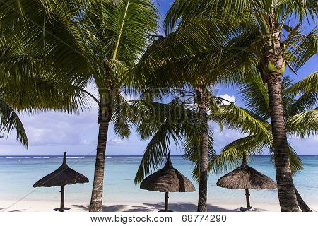 Parasols and Coconut trees in Mauritius island