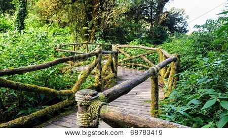 Pathway In The Forest Made Of Wood
