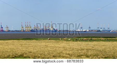 Panoramic view of container terminals at Bremerhaven, meadow with cows in foreground