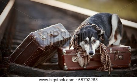 The Dog Lies On Suitcases On Rails