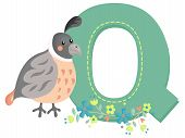 picture of quail  - The Letter Q for the animal Quail - JPG