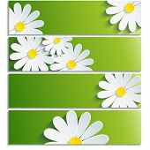 stock photo of chamomile  - Set of banners with 3d flower chamomile isolated on white background - JPG