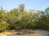 image of starving  - Trees hanging on soft sand and eroding sandstone in spring at Starved Rock - JPG