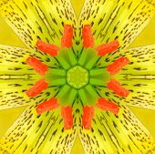 picture of asiatic lily  - Yellow Concentric Flower Center Macro Close - JPG
