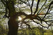 foto of diffraction  - Sun Shinning Through Tree Branches - JPG