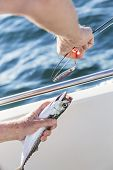 picture of game-fish  - Fishing lures or fishing hook with mackerel from the sea - JPG
