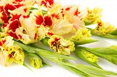 stock photo of gladiolus  - Colorful fresh red and yellow gladiolus isolated on white  - JPG