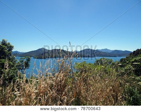 View Of Cook Strait with Grasses