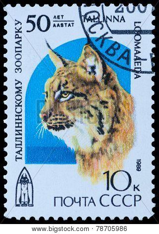 Shows Lynx