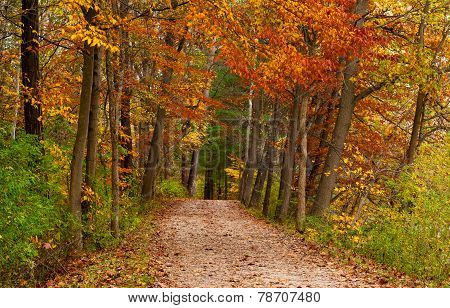 Path In A Fall Woods