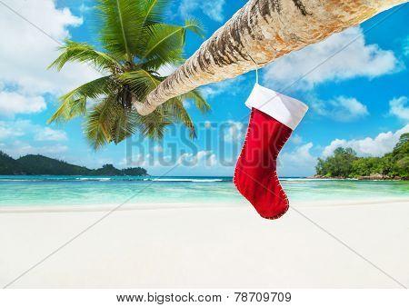 Christmas Sock On Palm Tree At Tropical Ocean Beach