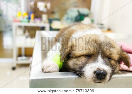 Cute Puppy Ill And Sleep On Operating Table In Veterinarian's Clinic