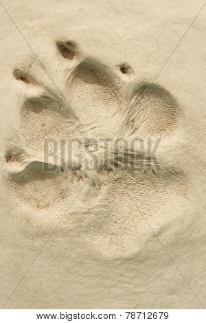 Imprint of a dog