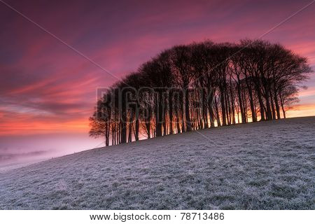 Fiery Sunrise Over Misty Woods