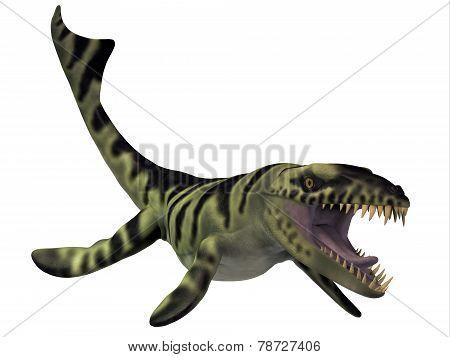 Dakosaurus Dinosaur