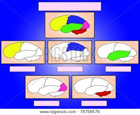 The brain samples on a blue background