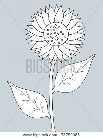 The sunflower on a gray background