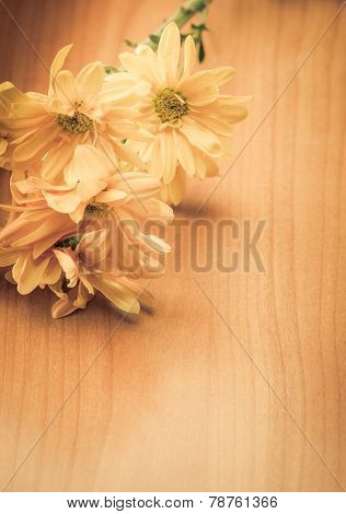 Bunch of creme color flowers. Clear space for headline and text.