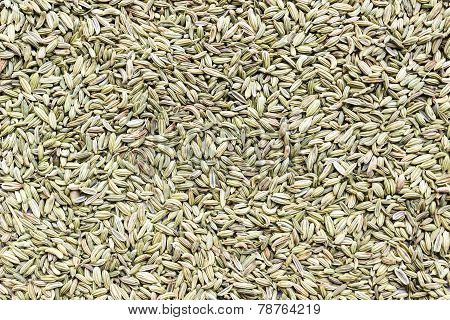 fennel seeds background