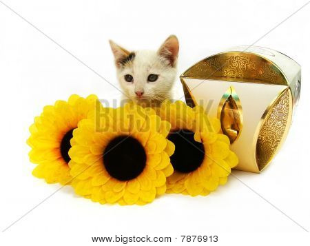 Kitten, box of sweets and flowers