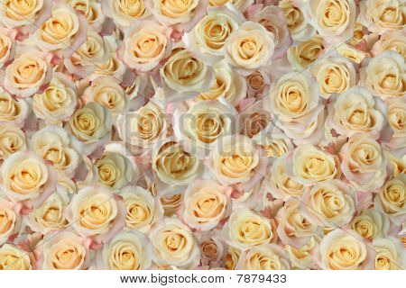 Background Of The Many Roses