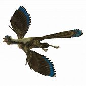 stock photo of primitive  - Archaeopteryx is the most primitive known bird and lived in the Jurassic Age of Germany - JPG