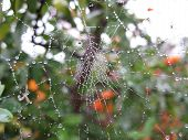 foto of cobweb  - Cobweb wetted by the rain on a beautifull day - JPG