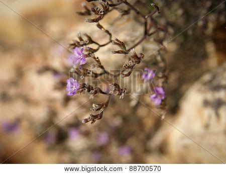 Flowers And Stones, Bol, Brac, Croatia