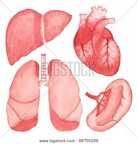 Watercolor set of human internal organs on the white background, aquarelle. Vector illustration.