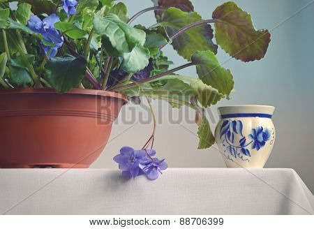 Violet flower in a pot.