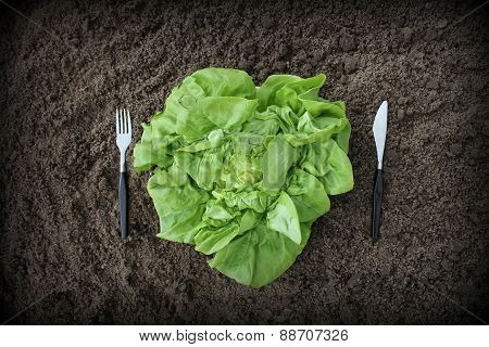 fork and knife in soil and lettuce on plate