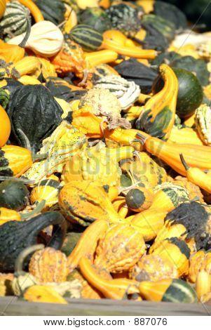 Fall Gourds 1