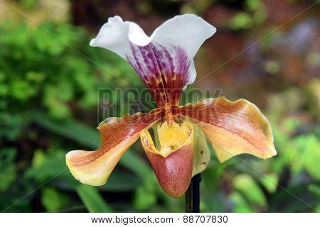 Orchid Predator
